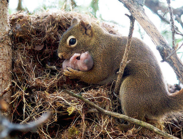 5. Squirrels adopt squirrel babies that have been abandoned by their parents.