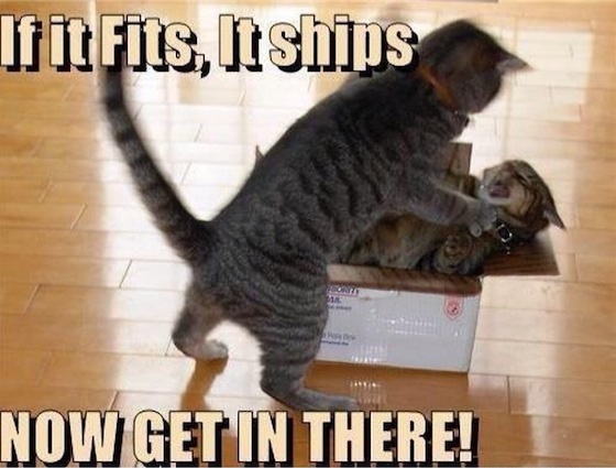 Funny Memes If: 50 Best Funny Cat Memes To Make Your Day