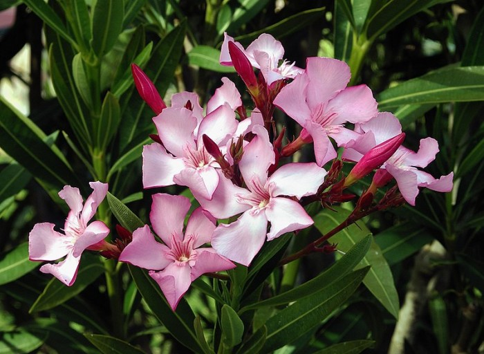 25 Deadly Plants You Should Always Avoid
