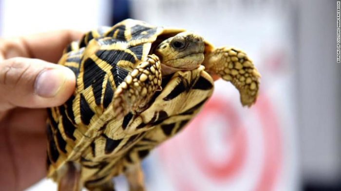 More than 1,500 live turtles found duct-taped in suitcases